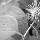 Pollination by wsellers