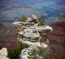 Grand Canyon Rock on South Rim by Lee Craig