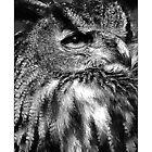 Owl (Black & White Version) by MoGeoPhoto