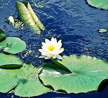 Lily Pad by ArtChick