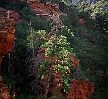 Inside Sedona and Oak Creek Canyon by Lee Craig