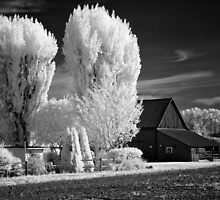 Black and white infrared print wall art - rural America barn and trees - The Color of Memories by visionitaliane