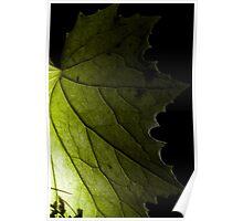 Macro leaf close up against the light green black decoration - La fata dietro la foglia Poster