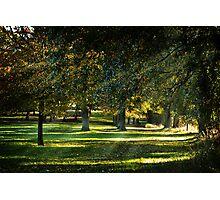 Dappled Light Photographic Print