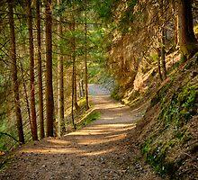 Path in an alpine forest lit by the sun naturalistic landscape color fine art - Sui sentieri degli Elfi by visionitaliane