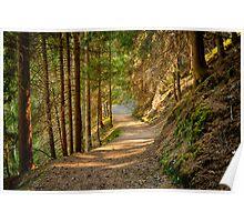 Path in an alpine forest lit by the sun naturalistic landscape color fine art - Sui sentieri degli Elfi Poster