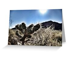Cactus in the sun Greeting Card