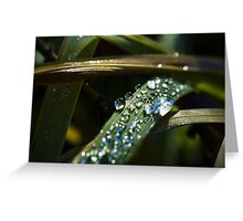 Close up dew drops on grass blade macro photography fine art color wall art - Lacrime della notte Greeting Card