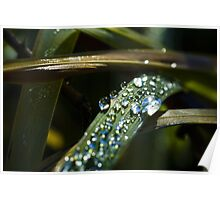 Close up dew drops on grass blade macro photography fine art color wall art - Lacrime della notte Poster