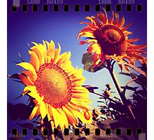 Girasoli in Toscana Photographic Print