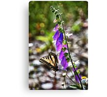 Butterfly on pink flowers close up macro nature color photo - Farfallone Canvas Print