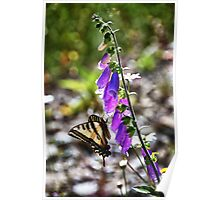 Butterfly on pink flowers close up macro nature color photo - Farfallone Poster