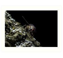 Fly on tree bark fine art insect macro shot - Con la Mosca Art Print