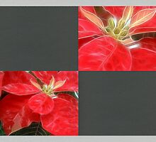 Mottled Red Poinsettia 1 Ephemeral Blank Q6F0 by Christopher Johnson
