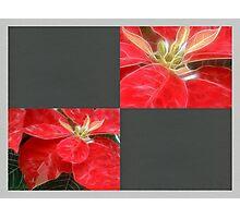 Mottled Red Poinsettia 1 Ephemeral Blank Q6F0 Photographic Print