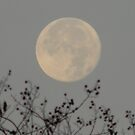 Early Morning Cold Moon - View Larger by Navigator