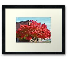 Red Maple Tree Framed Print