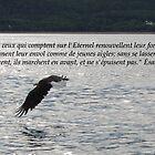 Es. 40:31 fr2 by hummingbirds
