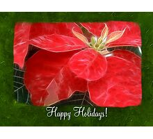 Mottled Red Poinsettia 1 Ephemeral Happy Holidays P1F1 Photographic Print