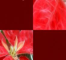 Mottled Red Poinsettia 1 Ephemeral Happy Holidays Q10F1 Sticker