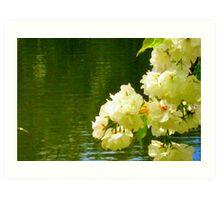 Cherry Blossom reflections Art Print