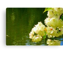 Cherry Blossom reflections Canvas Print
