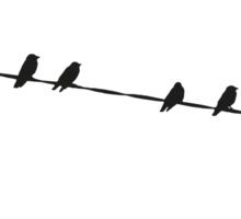 Black Birds on a Wire Sticker