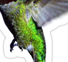 Hummingbird Color Photo Sticker