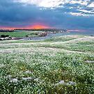 Rolling Fields by John Sharp