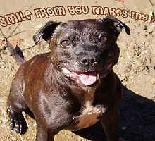 Staffie Smile by bellecards