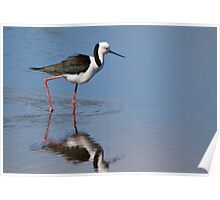 Wader Reflections Poster