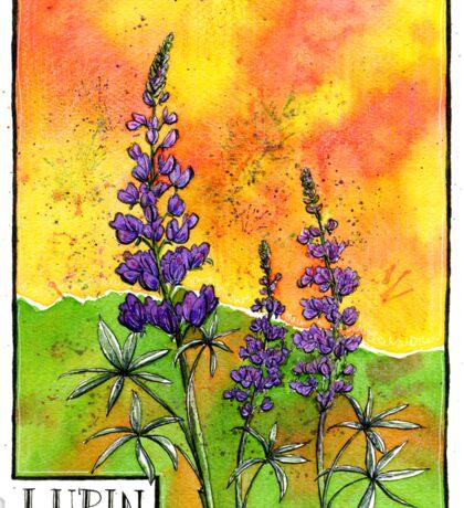Lupin Flowers Sticker