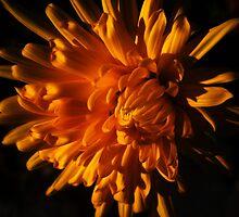 Autumn Flower by Vitta