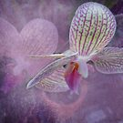 Orchid by designingjudy