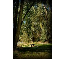 Seat of Meditation Photographic Print