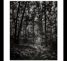Alternative Forest II by hankfrentzphoto