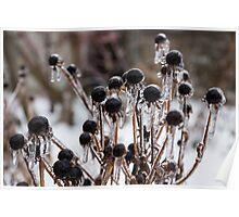 Toronto Ice Storm 2013 - Frozen Black Eyed Susans  Poster