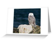 Snowy Owl - Seabrook, NH 12-04-13 Greeting Card