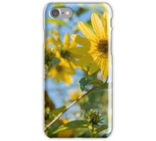 Sunflowers and Sneezeweed, ?Helianthus and Helenium, Strathcona Community Garden, Vancouver BC. iPhone Case/Skin