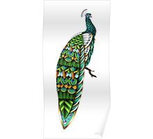 Ornate Peacock Color Poster