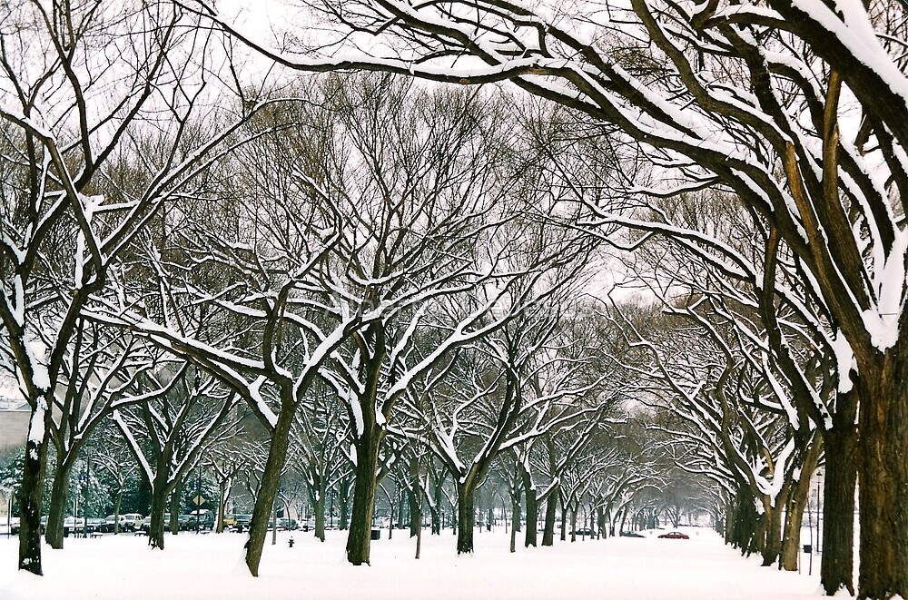 Snowy Capital by Alberto  DeJesus