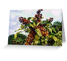 Ripening into the Maroon Nineteen Greeting Card