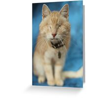 Gumbo against Blue Greeting Card
