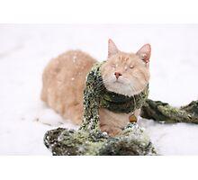 Gumbo in Snow Photographic Print