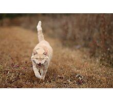 Gumbo on Brown Grass Photographic Print