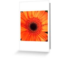 Gerbera Orange Greeting Card