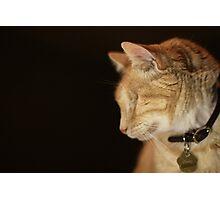 Gumbo Profile against Black Photographic Print