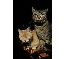 Gumbo & Mr. Grigsby Photographic Print