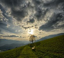 Lonely tree against sunset meadow in the Alps color photo wall art - Il primo Albero by visionitaliane