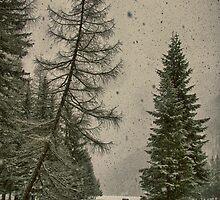 Heavy snowfall winter landscape color - Alberi d'Inverno by visionitaliane